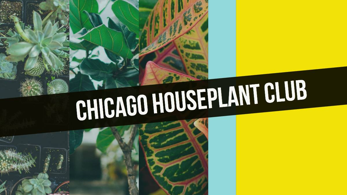Chicag Houseplant Club